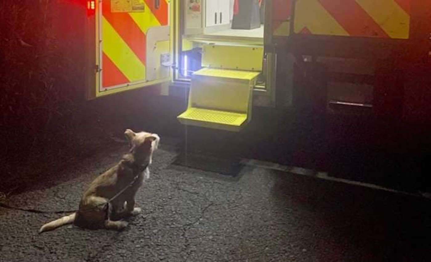 Social Media is Melting Over This Adorable Photo of a Dog Awaiting His Elderly Owner's Treatment