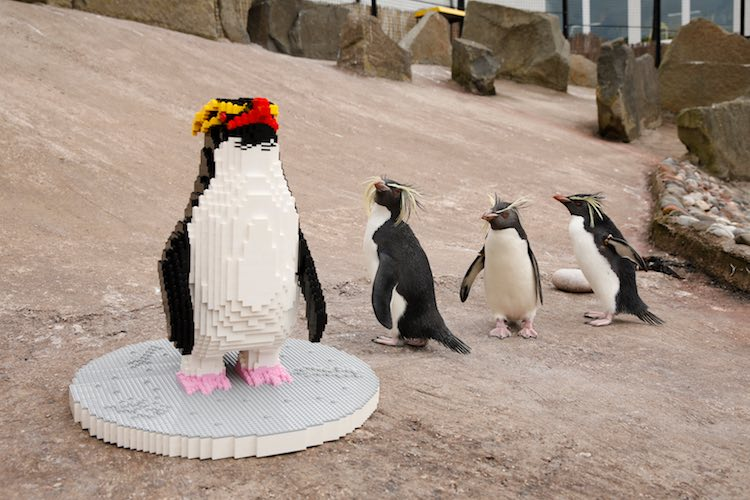 Zookeepers Capture Penguins' Amusing Reactions to Meeting