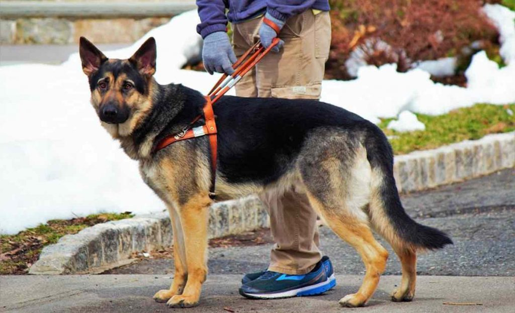 College is Pairing Service-Dogs-in-Training With Stressed