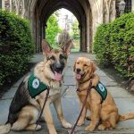 service dogs at Princeton University college- part of RUSEPRC