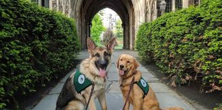 service dogs at Princeton University college- part of RUSEPRC