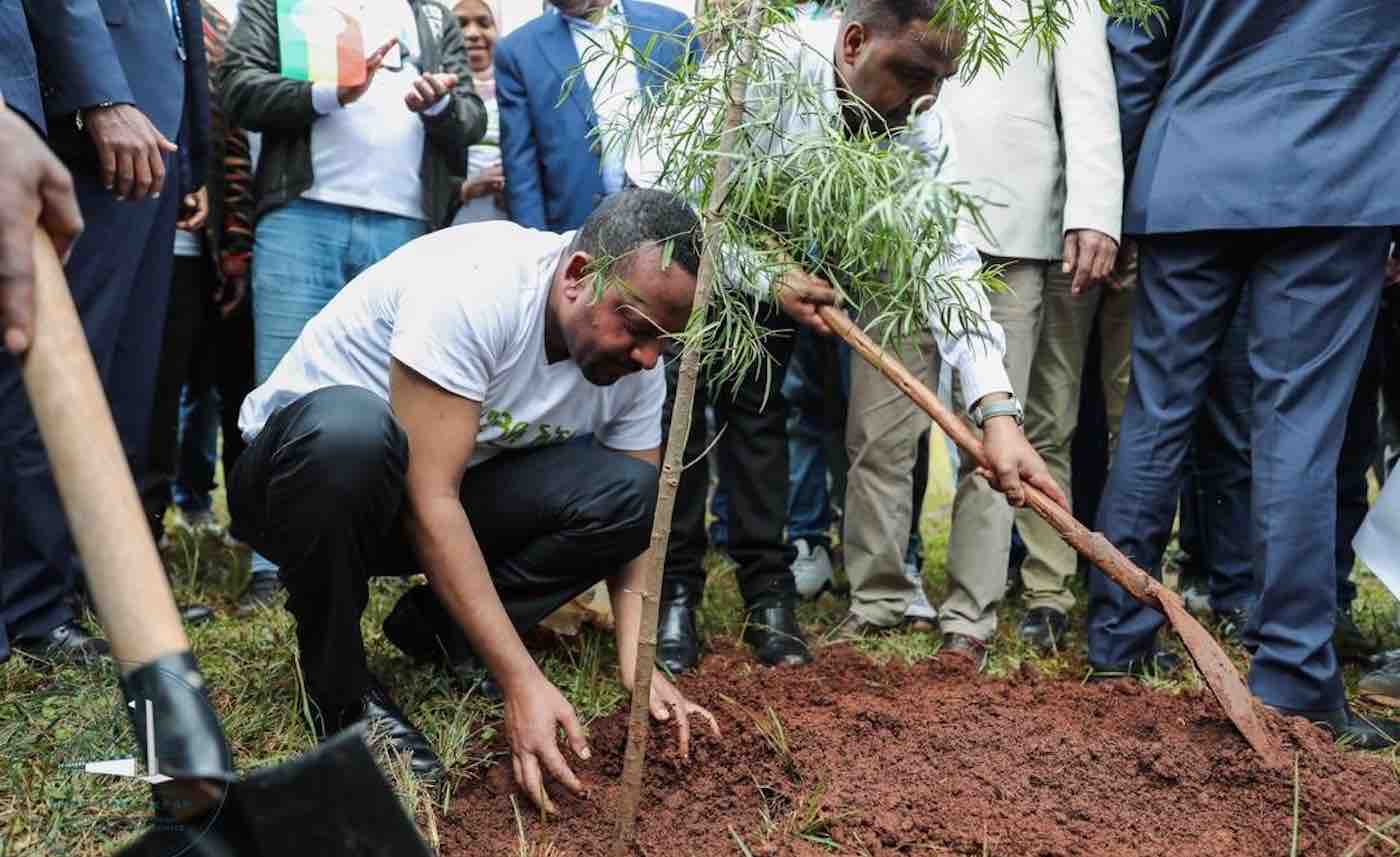 Ethiopia plants more than 200 million trees in 1 day