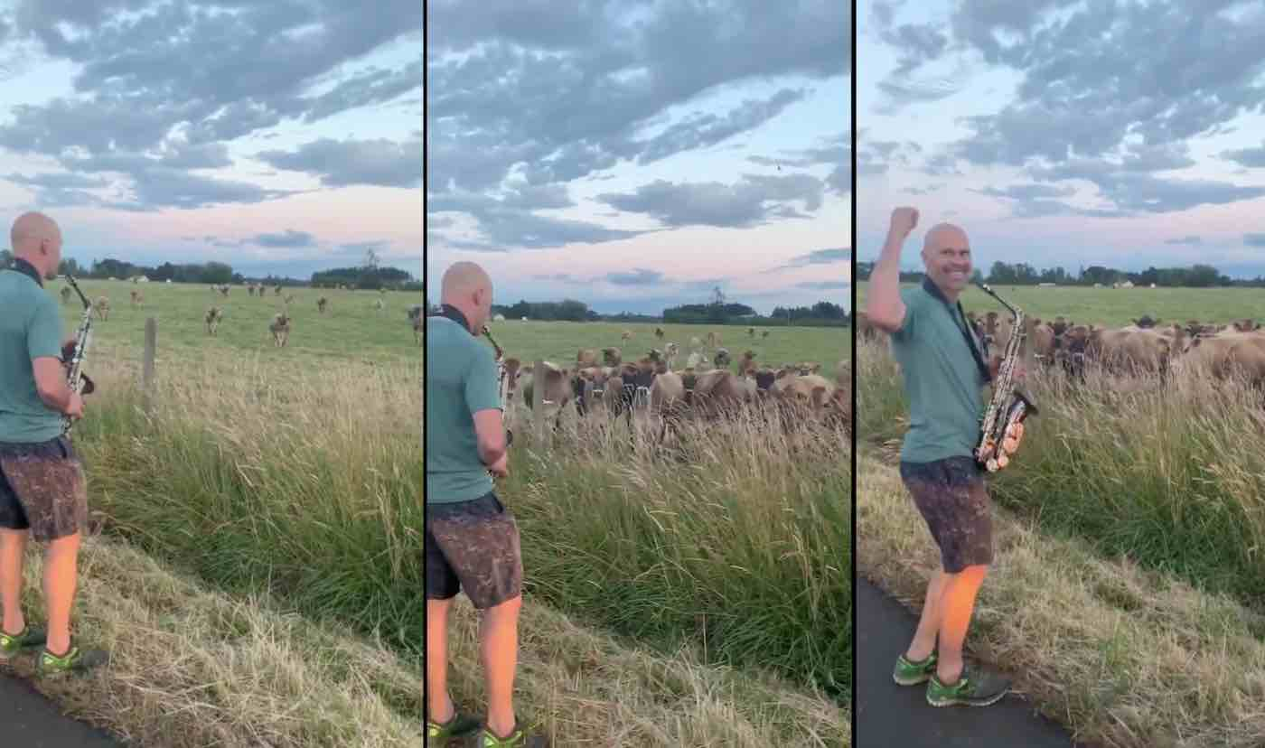 Watch Excited Dad Captivate His Cow Herd With Saxophone Serenade in New Viral Video