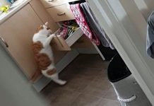 c39e76e8ea4f3 Watch Cheeky Feline Get Caught Raiding the Sweets Drawer in the Kitchen