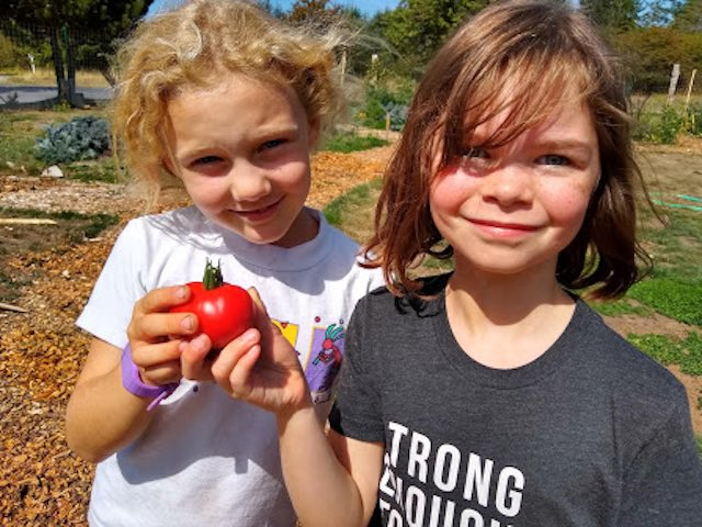 School Turns Resource-Greedy Lawn into 'Giving Garden' That Provides Produce to Feed the Poor