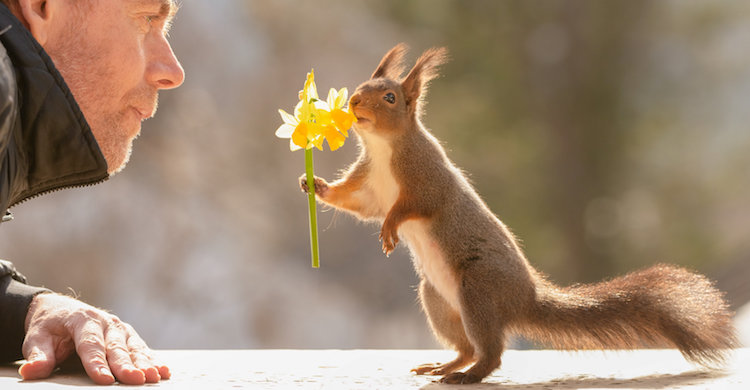 After Years of Gaining Trust of Local Squirrels, Photographer Has Captured the Most Wholesome Pictures