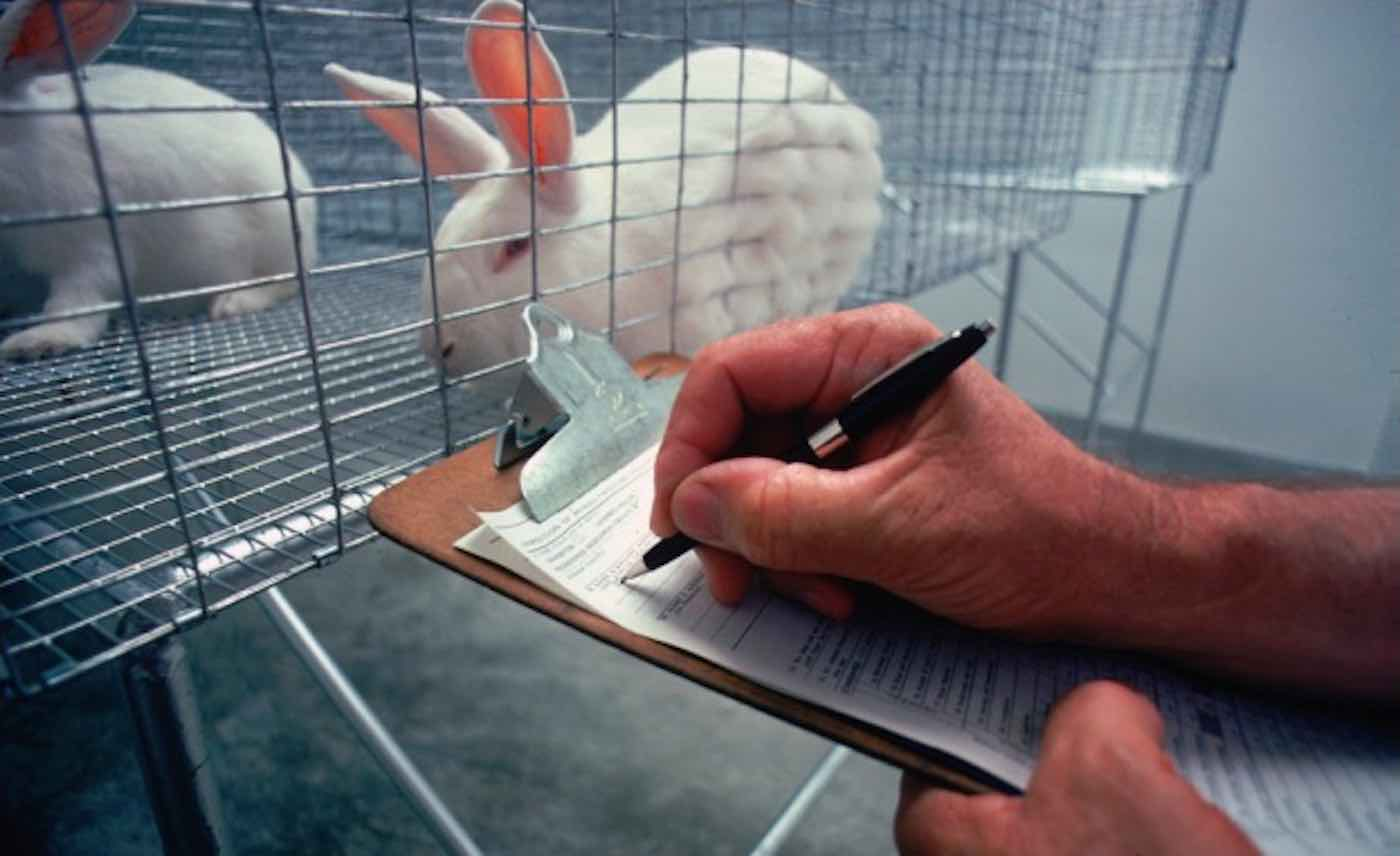 EPA to Begin Phasing Out Animal Testing and Funding Studies for More Humane Research Methods