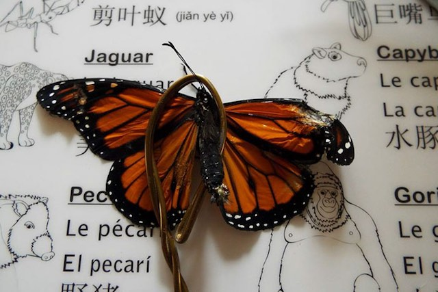 Woman Saves Injured Butterfly, Repairing Its Wing to Help It Fly Again