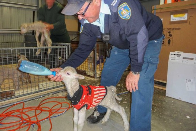 Prisoners Are Finding Purpose–and Rehabilitation–By Caring for Lambs for Drought-Stricken Farmers