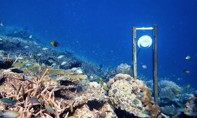 Researchers lure fish to great barrier reef using underwater speakers