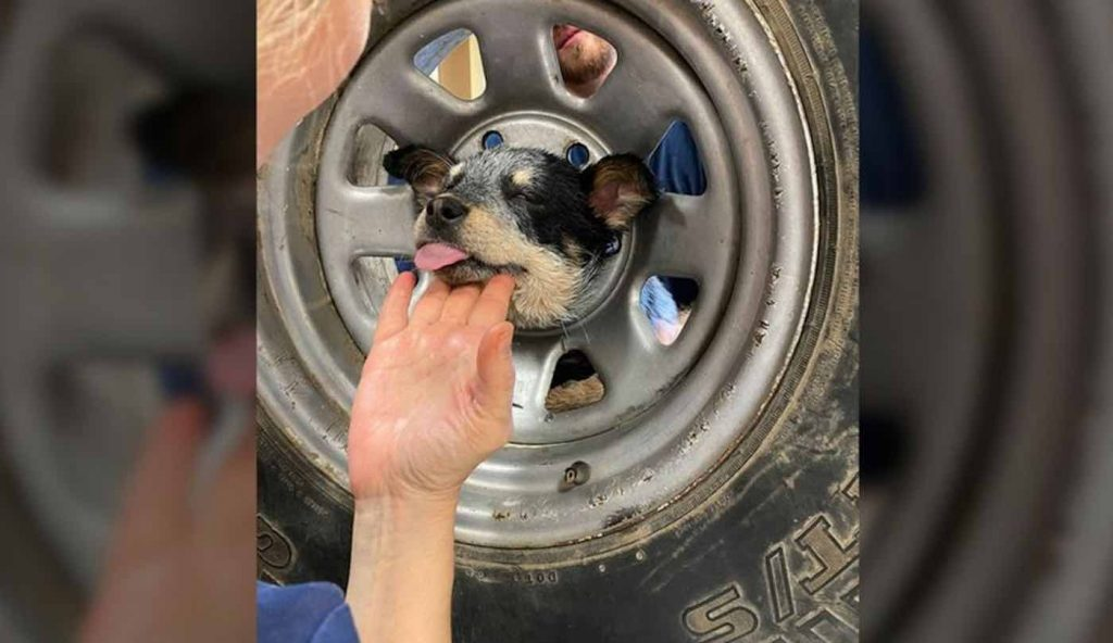 Firefighters Successfully Save Puppy From Metal Wheel Rim Using a Saw to Cut It Free