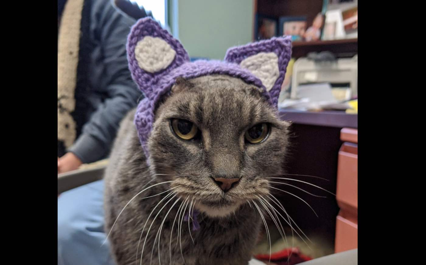 Stray Cat With No Ears Finally Adopted After Shelter Worker Crochets Her a Pair of Purple Ones