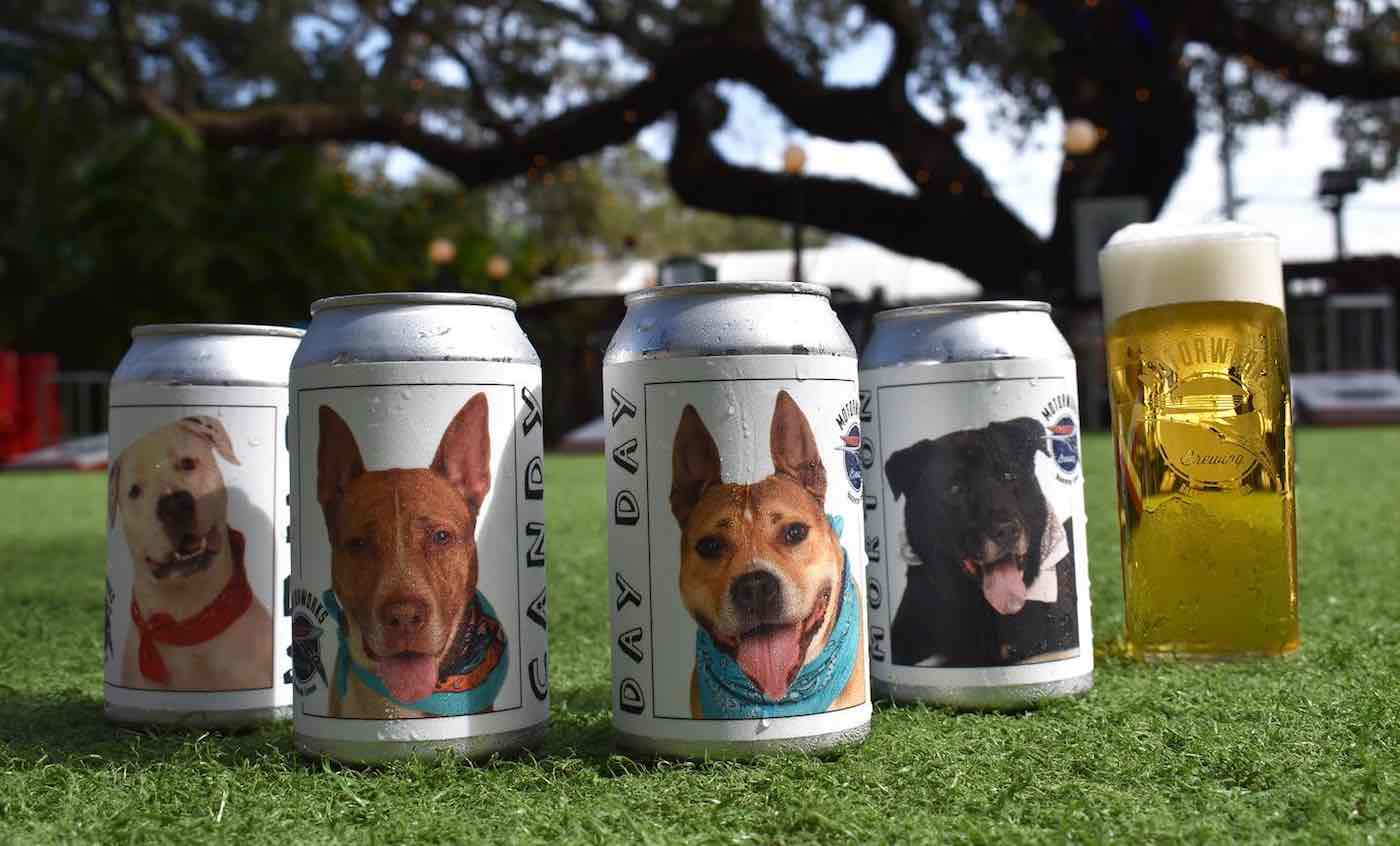 Shelter dog beer can campaign helps reunite missing dog with owner class=