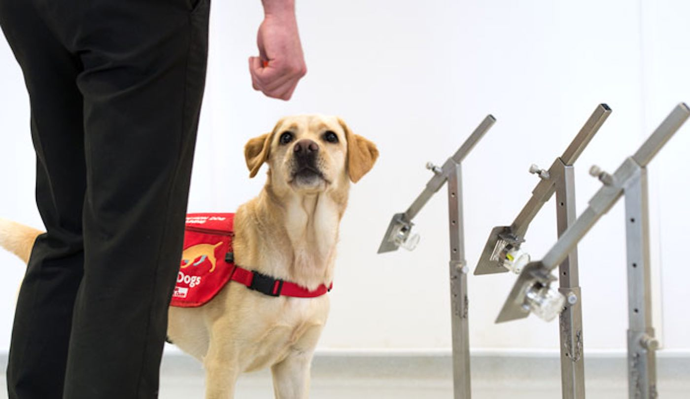 Medical Detection Dog