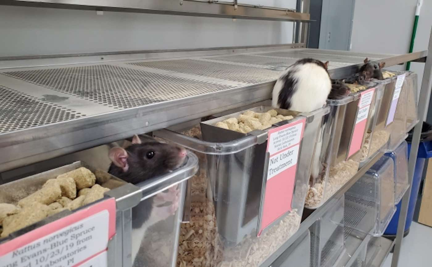 For The Last 20 Years College Professor Has Been Helping Intelligent Lab Rats Find Good Homes