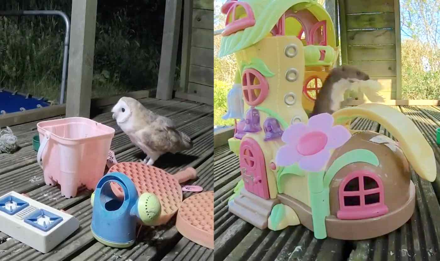 Amused Dad Films Adorable Wild Critters Playing on His Kids' Play Set