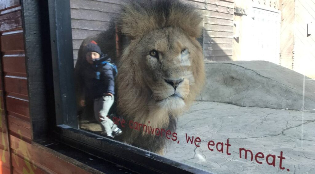 Mom Shares an 'Optical IIlusion' Photo of Her Son Standing Next to a Lion In The Zoo