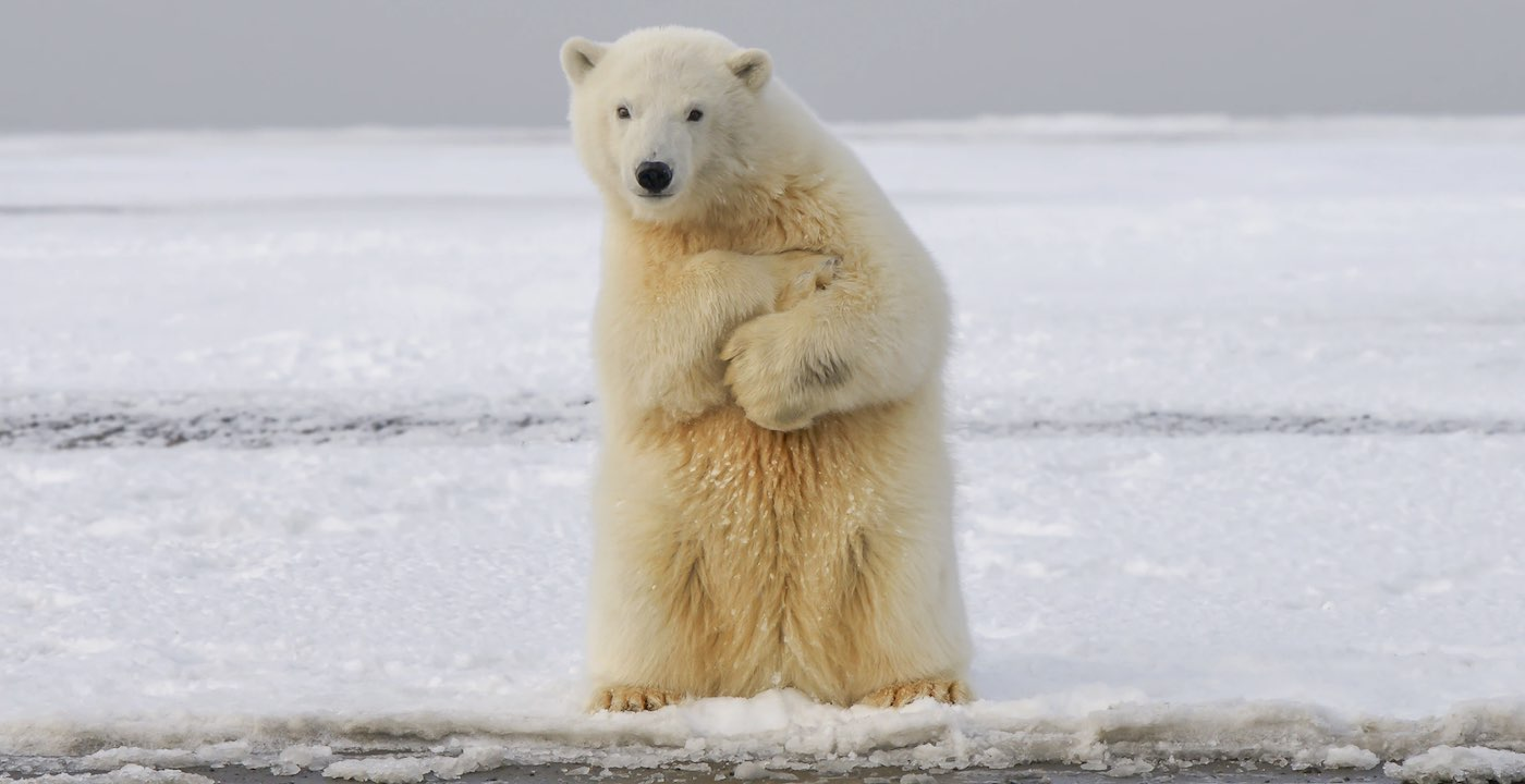 in-huge-victory-for-polar-bears-court-rejects-arctic-offshore-drilling-project