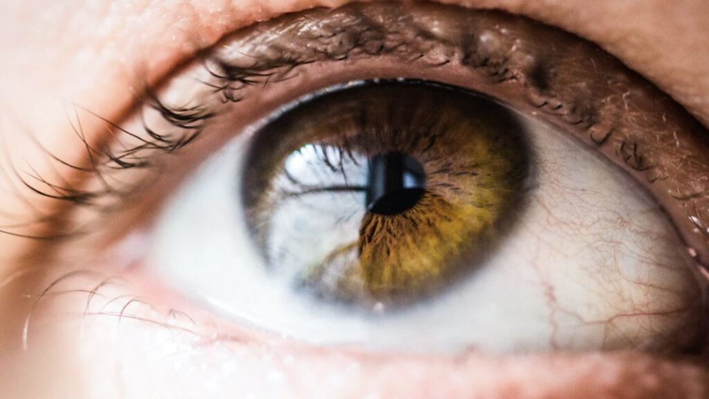 A Single Injection Reverses Blindness in Patient with Rare Genetic Disorder – Another RNA Success